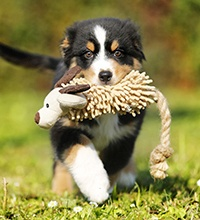 Knotted Ball for Dogs - 2