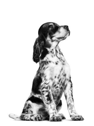 EgyPuppy Online Pet Shop - All Your Dog & Cat Supplies - 17