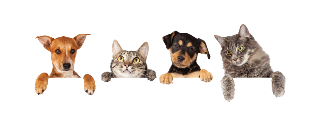 نحن متجر للحيوانات الأليفة متخصصون في الكلاب والقطط.