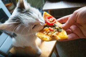 Basic Nutrition for Cats - 3