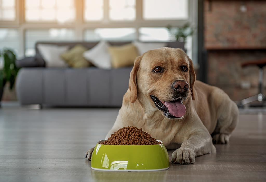 4 Steps to Choose a Healthy Dog Diet - 3