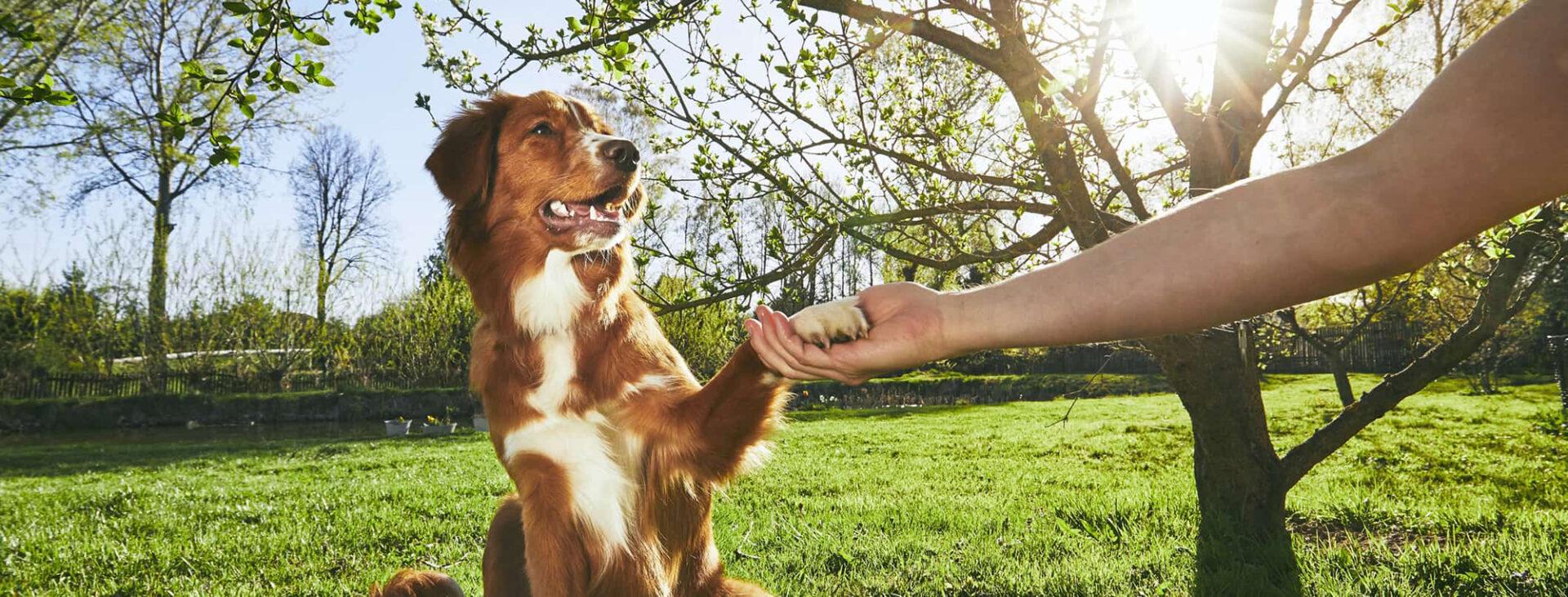 Dog Training – The Basic Commands - 6