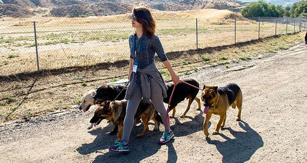 Dog Training – The Basic Commands - 8
