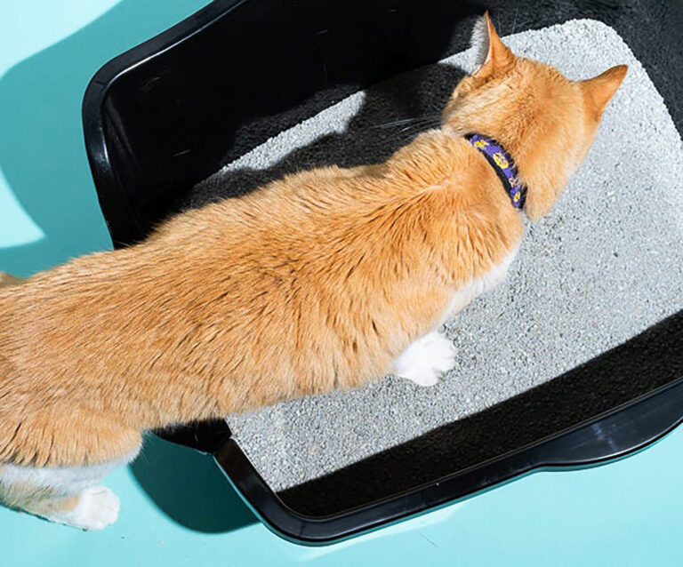 Cat Training – What you need to know as a cat owner - 7