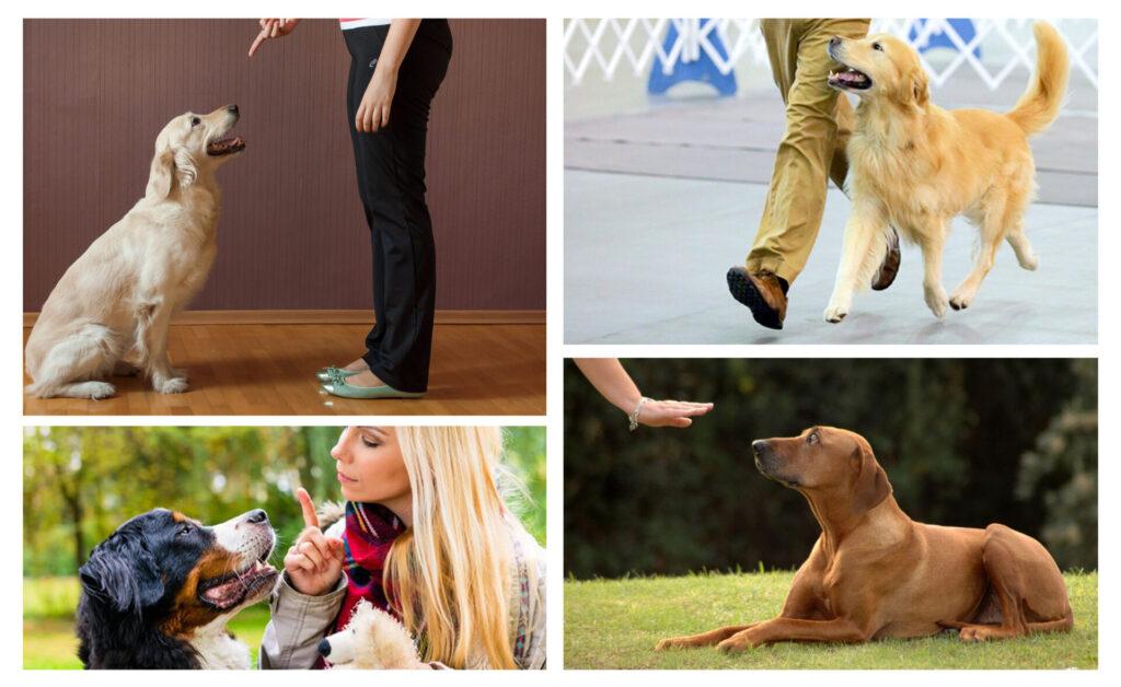 Dog Training – The Basic Commands - 7