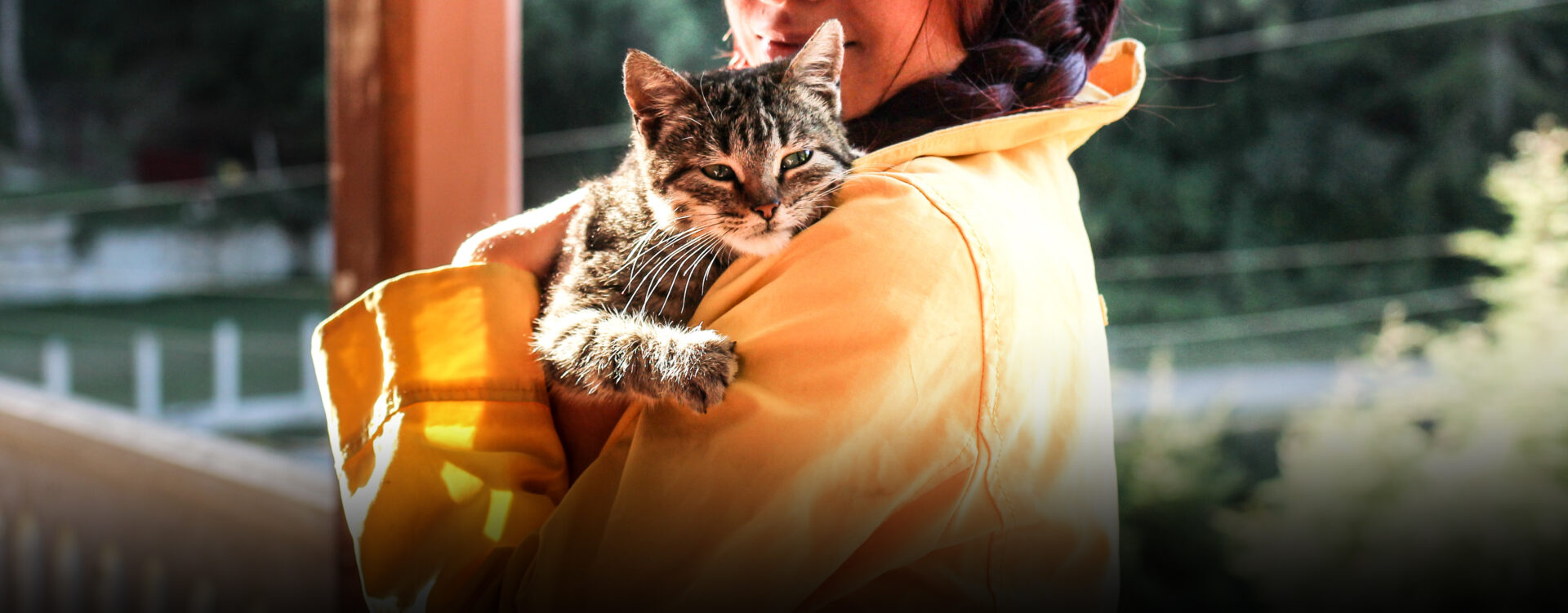 Cat Training – What you need to know as a cat owner - 4