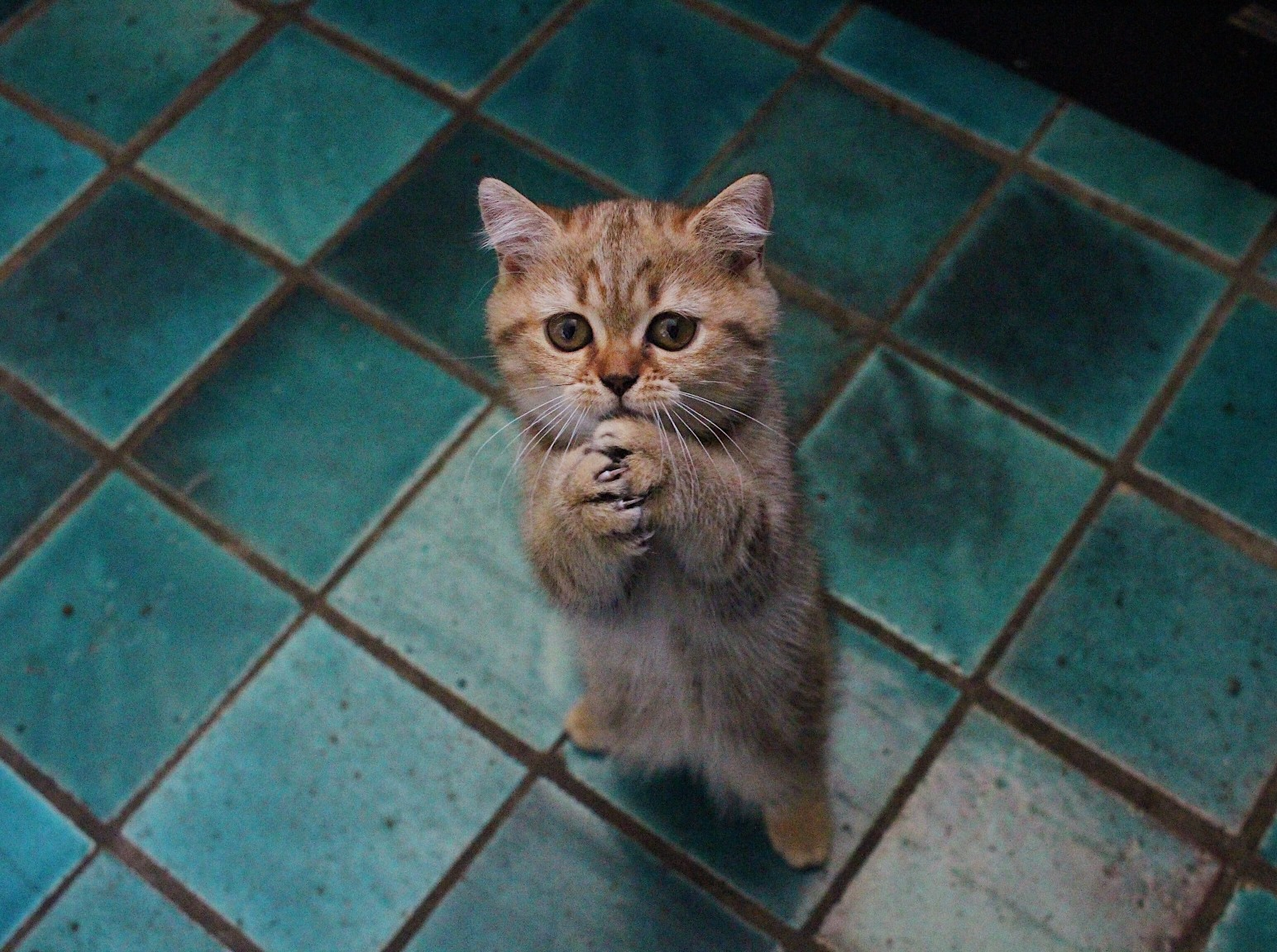 7 Things You Should Know Before Going to Buy a Kitten