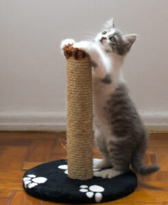 Cat Training – What you need to know as a cat owner - 5